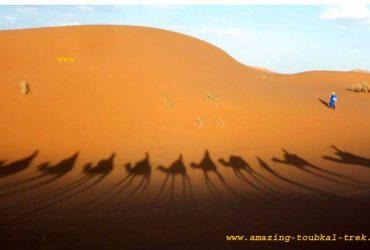 sahara desert tour marrakech