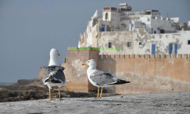 essaouira excursion from marrakech