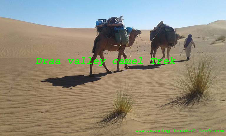 draa valley desert trek